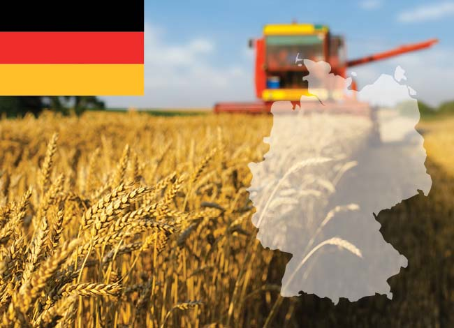 Germany flag and wheat field