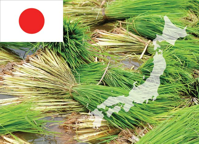 japan flag and rice