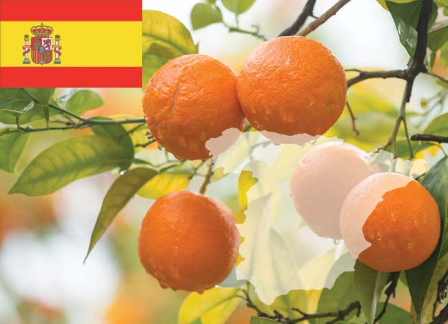 Spain flag and oranges